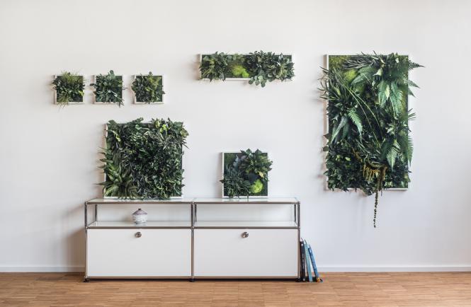 garten im quadrat stylegreen pflanzenbild aus moos und farnen besonders ppig typ dschungel. Black Bedroom Furniture Sets. Home Design Ideas