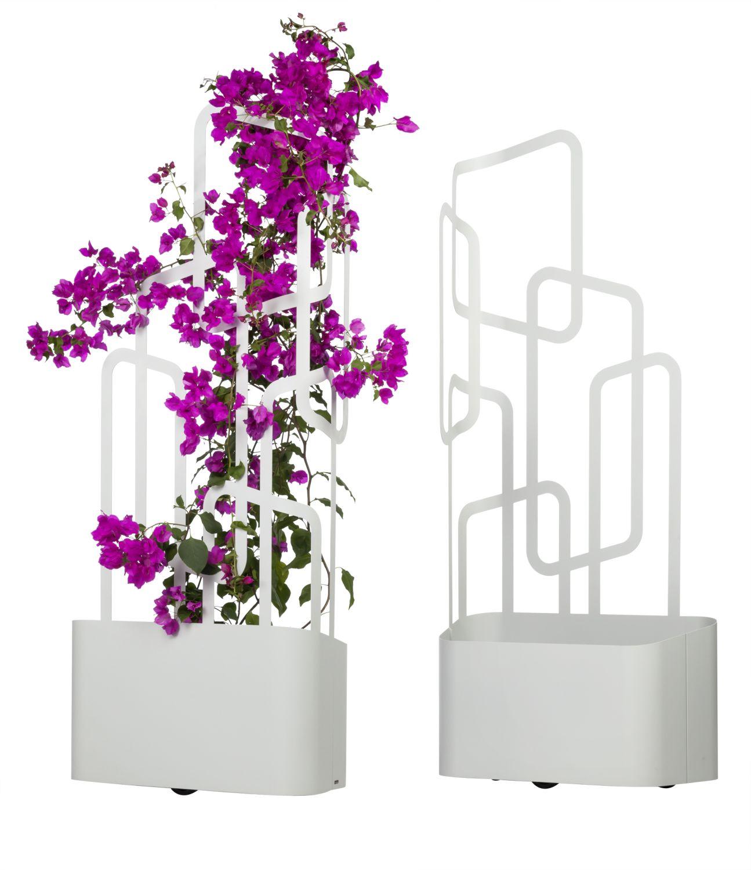 favorit pflanzk bel mit rankhilfe uu51 kyushucon. Black Bedroom Furniture Sets. Home Design Ideas