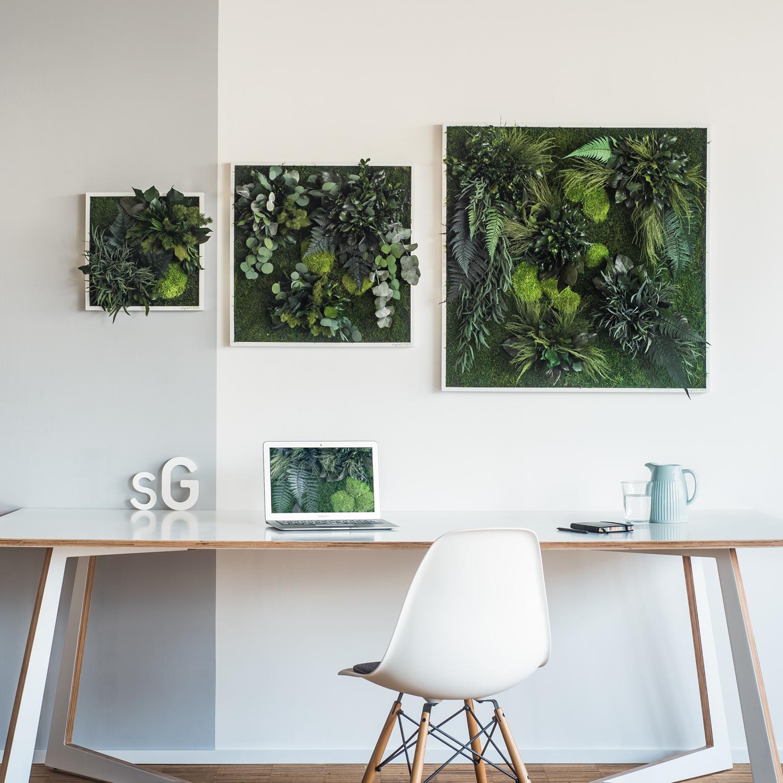 garten im quadrat stylegreen pflanzenbild aus moos und farnen echte pflanzen nat rlich. Black Bedroom Furniture Sets. Home Design Ideas